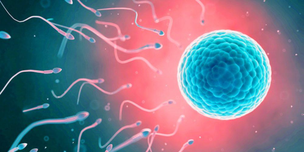Fertility 101